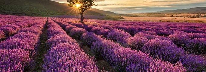 calming meadow