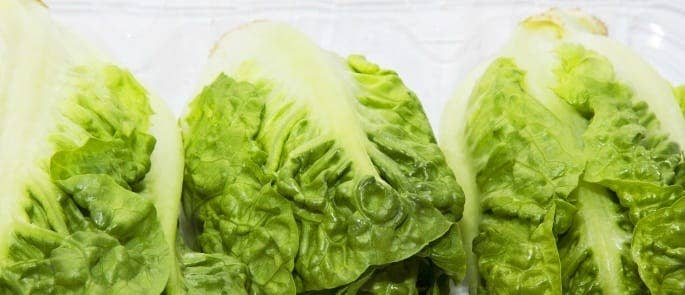 storing whole lettuce in the fridge