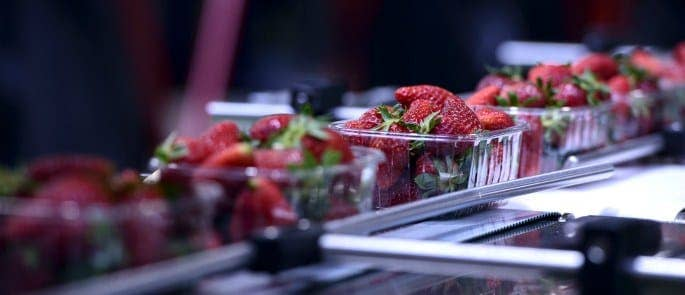 Strawberries on production packaging line