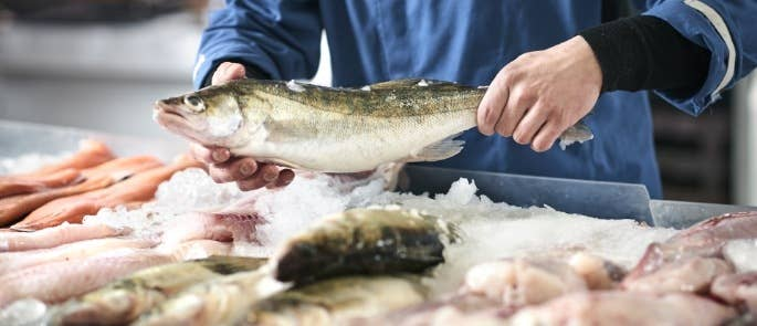 Fishmonger holding raw fish
