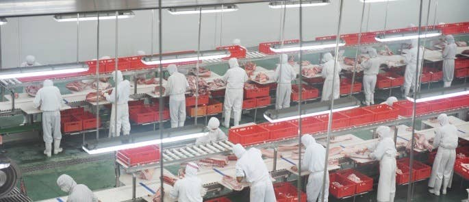 view from above looking down onto factory floor of a pork processing plant. Many workers in a line all wearing white overalls.
