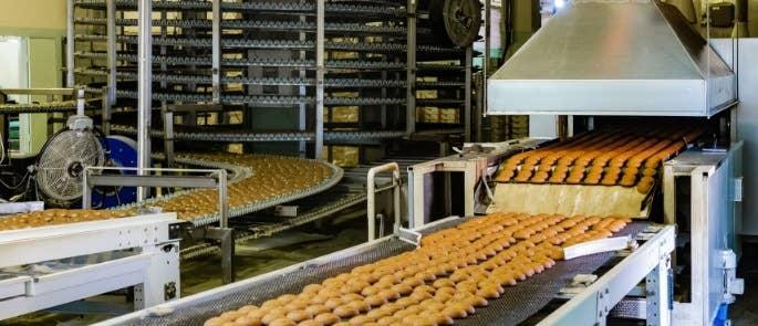 Biscuits on a conveyor belt system inside a large manufacturer.