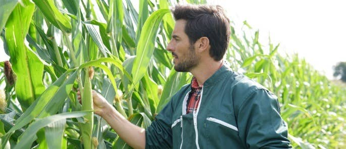Man stands in field checking quality of corn