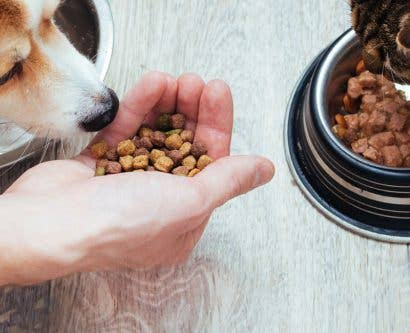 How to Start a Pet Food Business